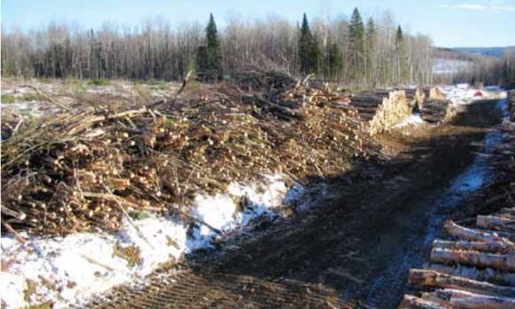 Une source d'énergie renouvelable, locale et sous-estimée: la biomasse